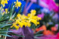 15 gardening tips for March