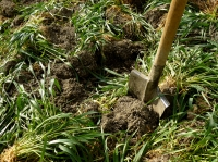 Boost your soil with green manures