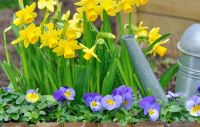 Colour your garden by planting winter bedding