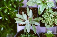 Guide to starting a herb garden