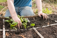 Have a go at square foot gardening