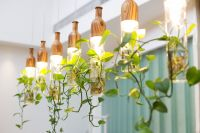 Home trends: hanging plants & lights