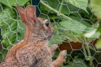 How to stop rabbits from eating your plants?