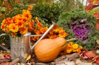 What to do in the garden in October
