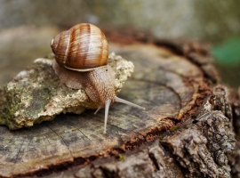 Tackling slugs and snails